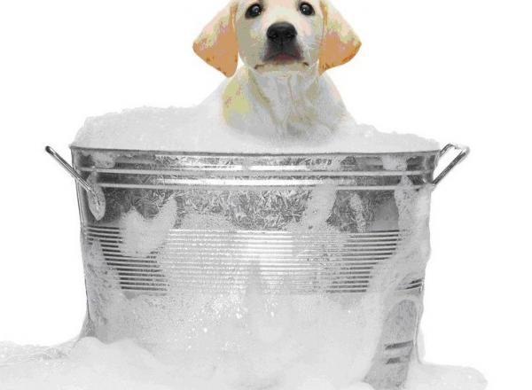 ペットもエプソムソルト入浴できますか?